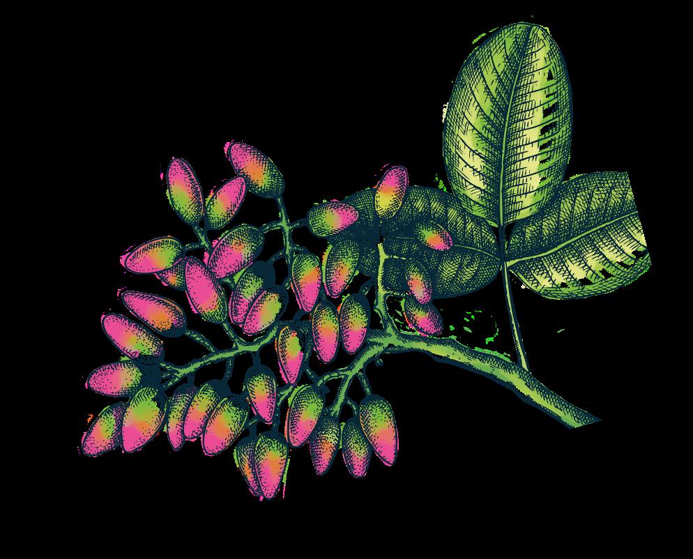 ilustracion-pistachos